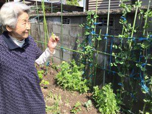 センター裏には和子ファームあり。小さいけれど和子母の手入れよく、ふかふかの良い土地です。