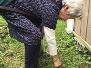 オオバコ身体にエエねんで! と大喜びで草取り、和子母。修道場庭にて